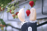 Robots Will Save the World From Strawberry Shortages