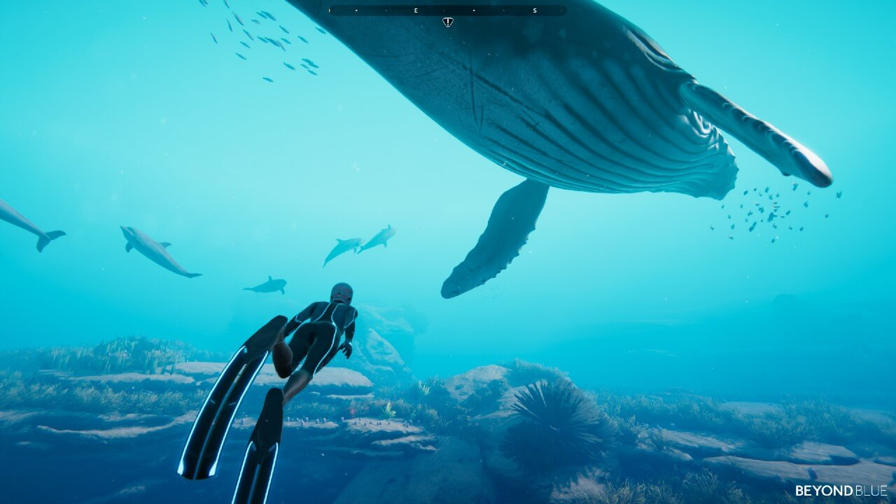 Beyond Blue To Release During World Oceans Day