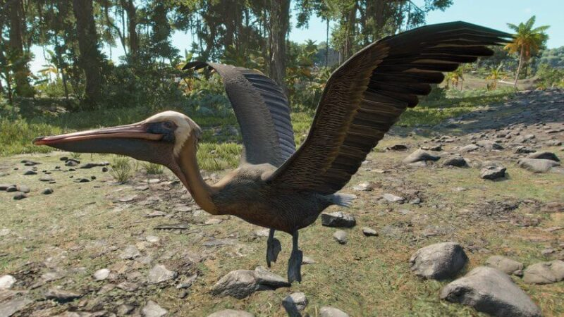 Far Cry 6: How to Feed Pelicans
