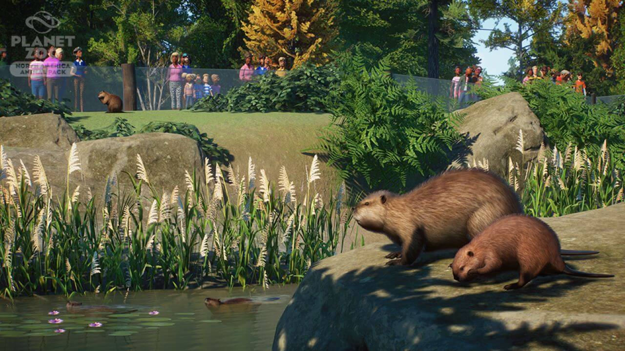 Planet Zoo Update 1.7 and North America Animal Pack Out Now
